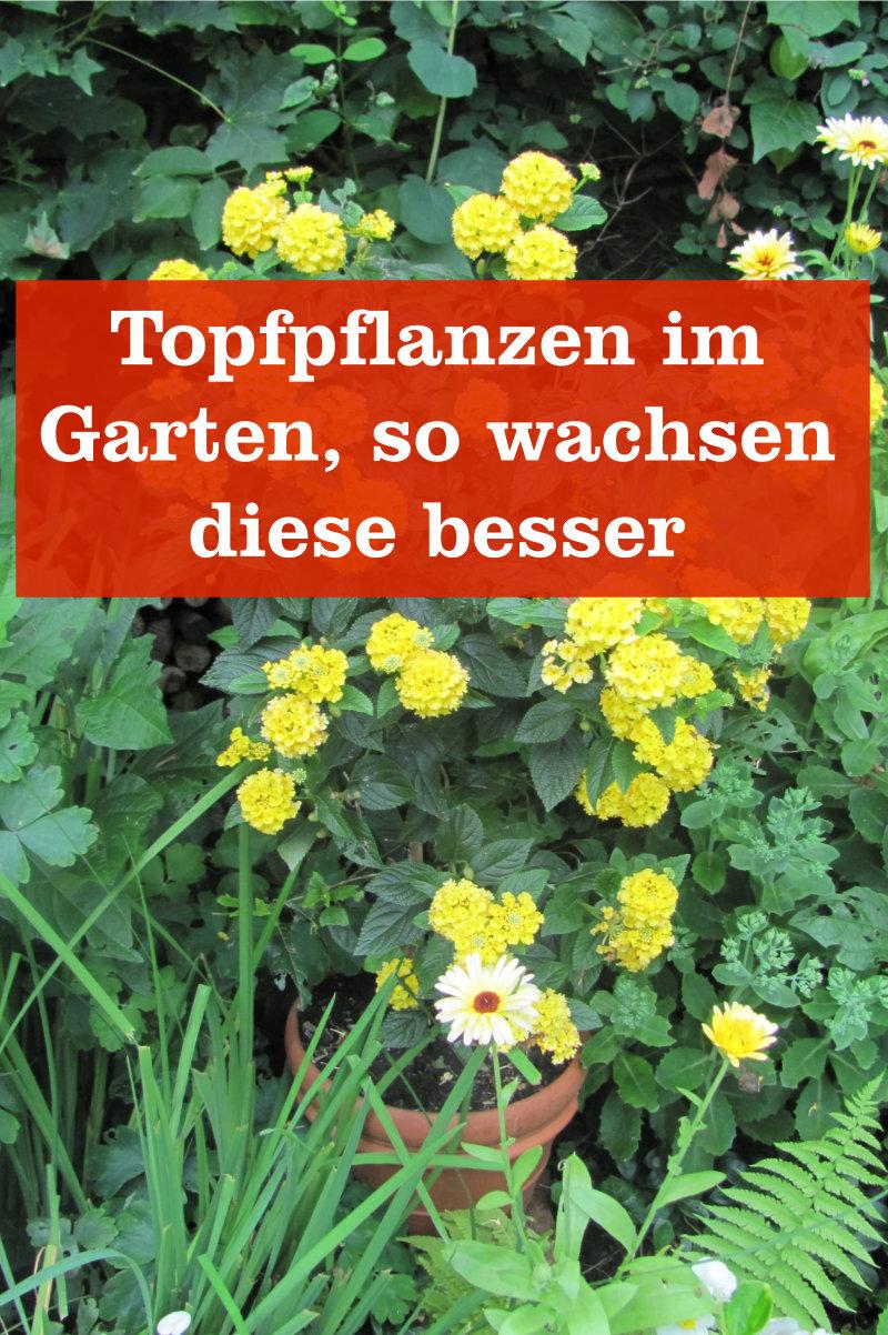 Topfpflanzen im Garten