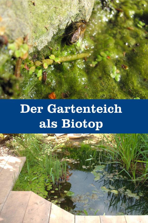 Gartenteich als Biotop