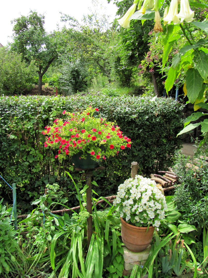 Kübelpflanzen Garten