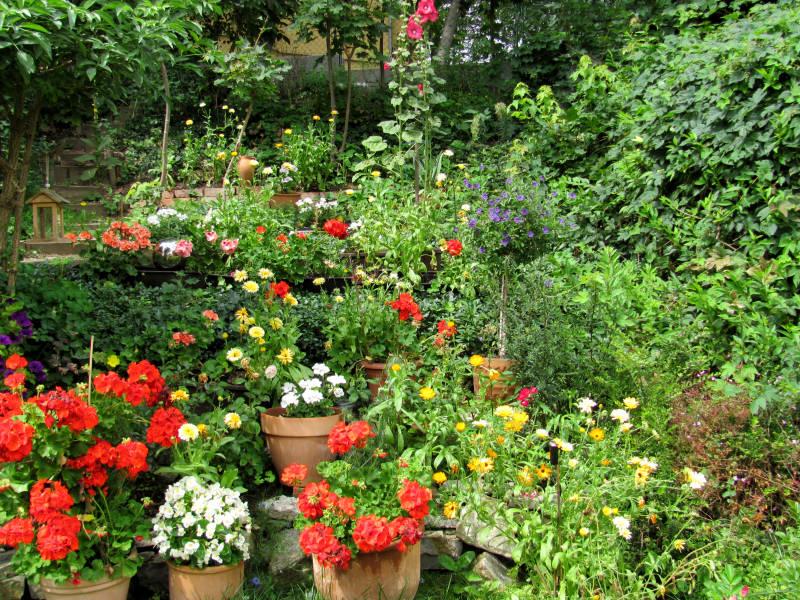 Kübelpflanzen im Garten