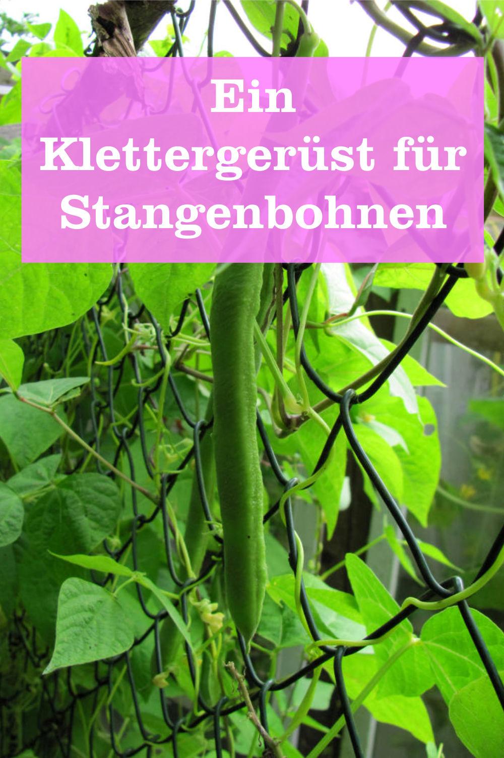 Klettergerüst für Stangenbohnen