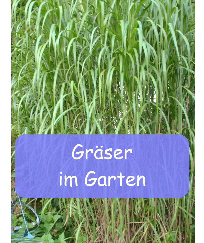 Graser Im Garten Gartenbob De Der Garten Ratgeber