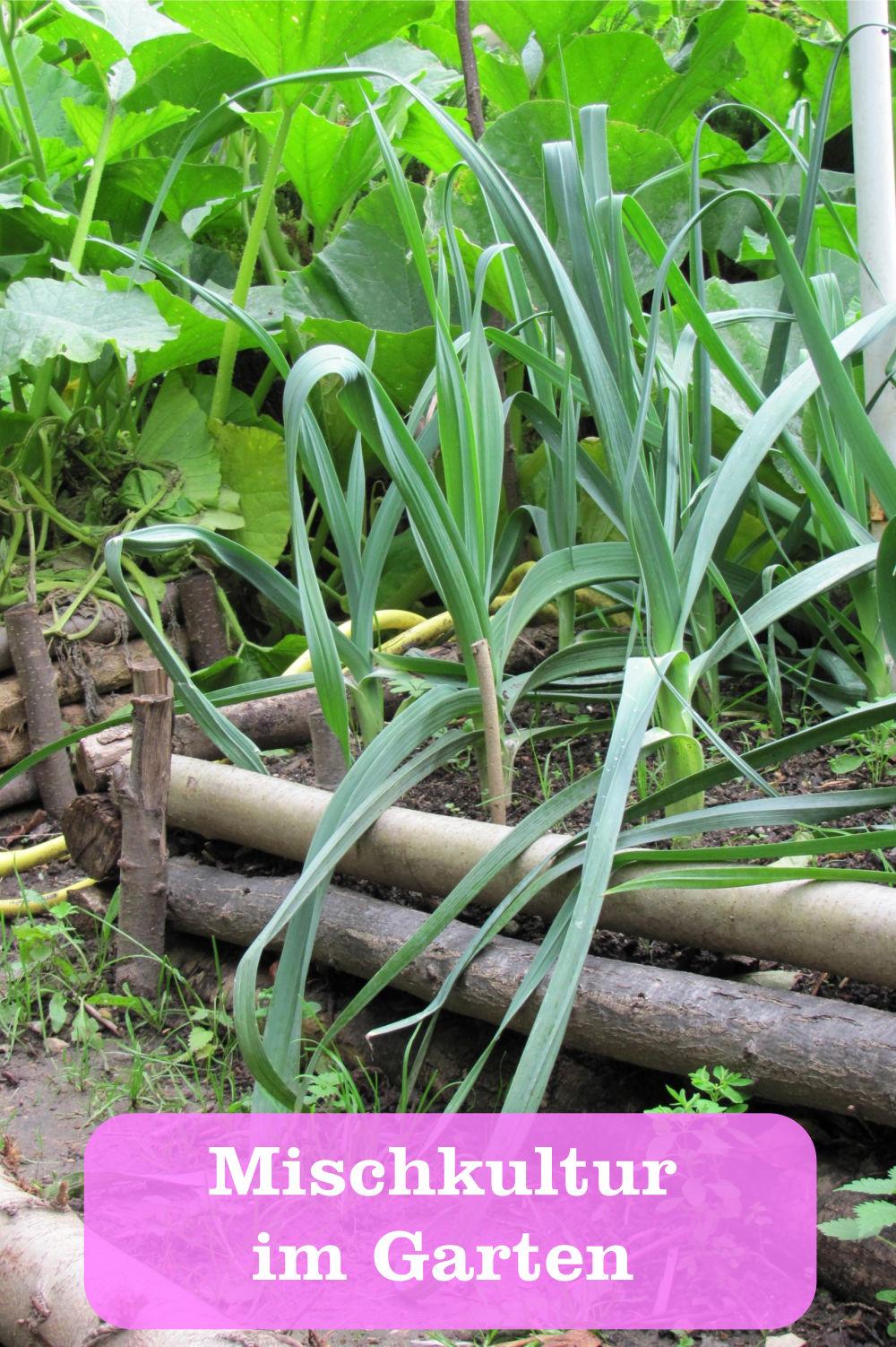 Mischkultur im Garten