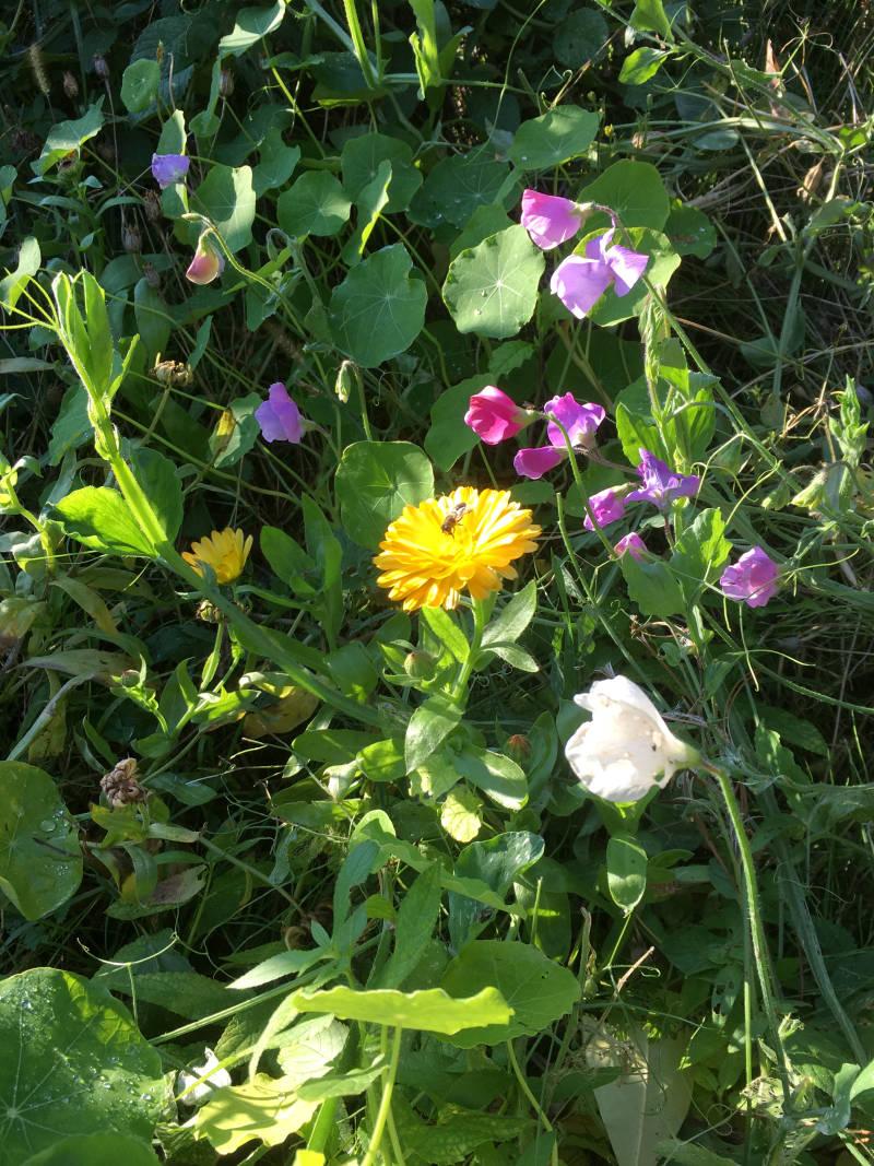 Blumenwiese Blumen