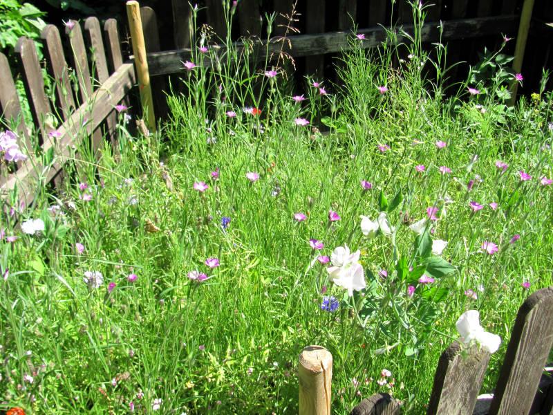 Blumenwiese Garten