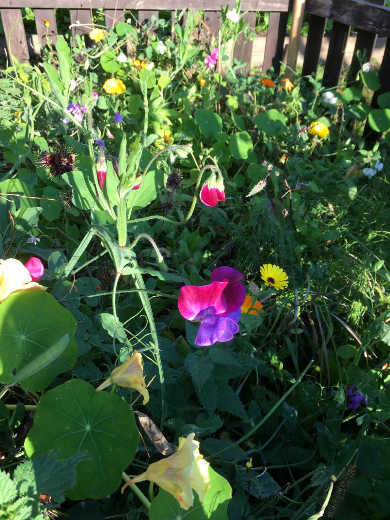 Blumenwiese große Blumen