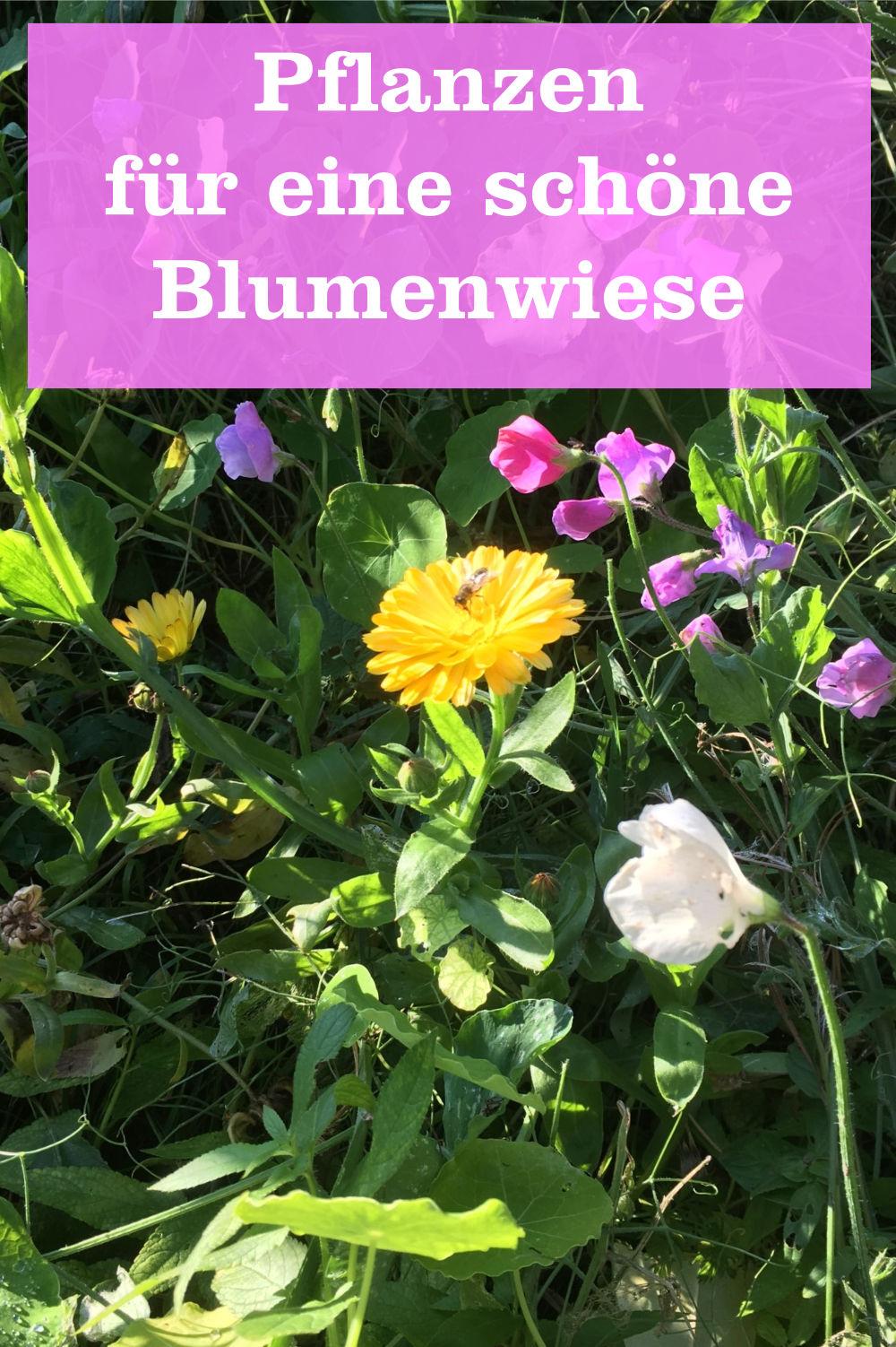 Pflanzen Blumenwiese