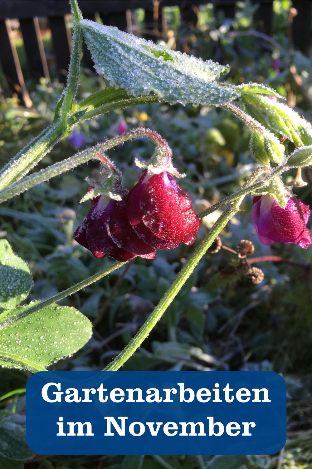 Gartenarbeit November