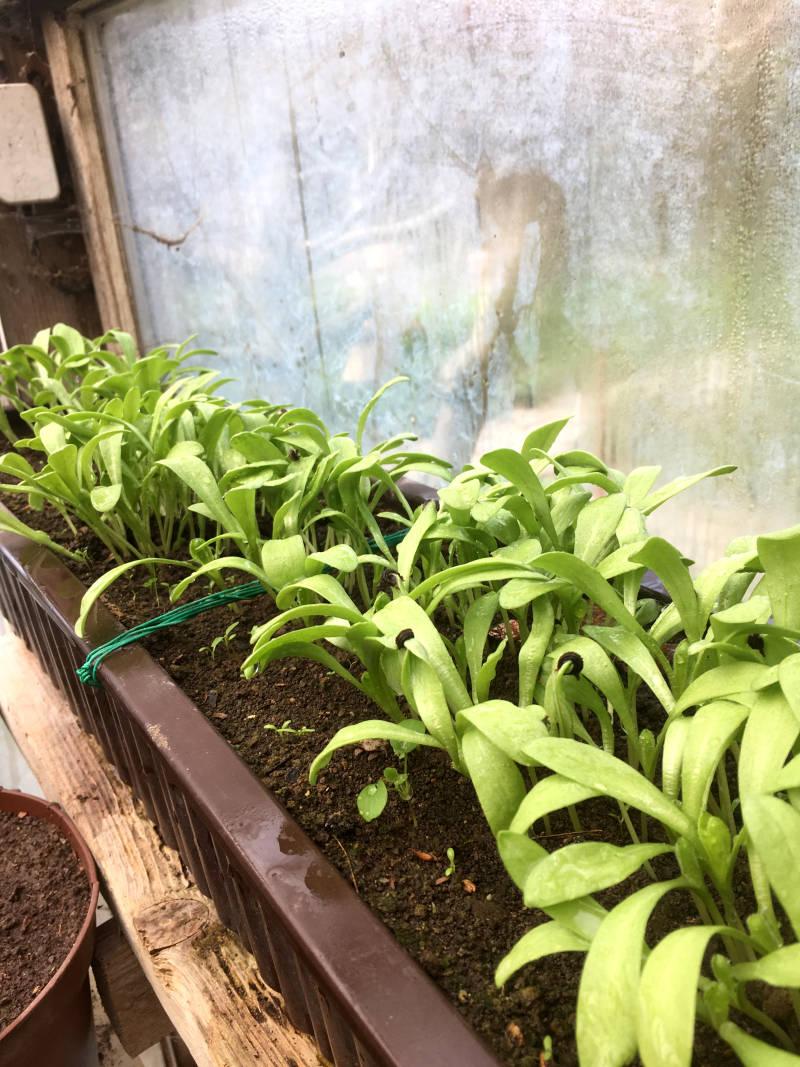 Pflanzen Gewächshaus Mai