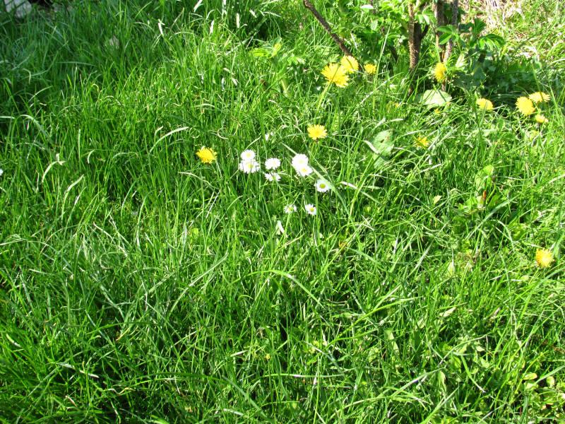 Rasen mähen April