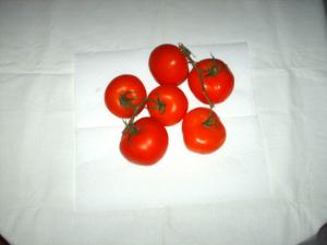 Tomaten im eigenen Garten