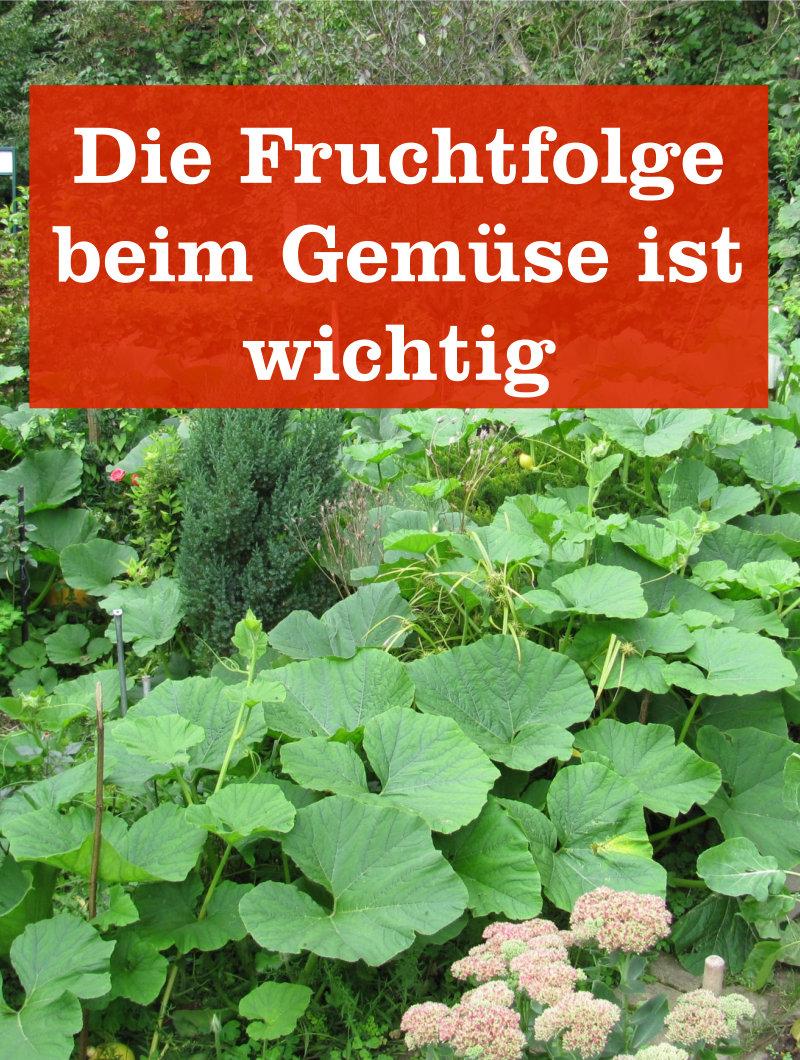 Gut gemocht Fruchtfolge beim Gemüse » GartenBob.de der Garten Ratgeber KW54