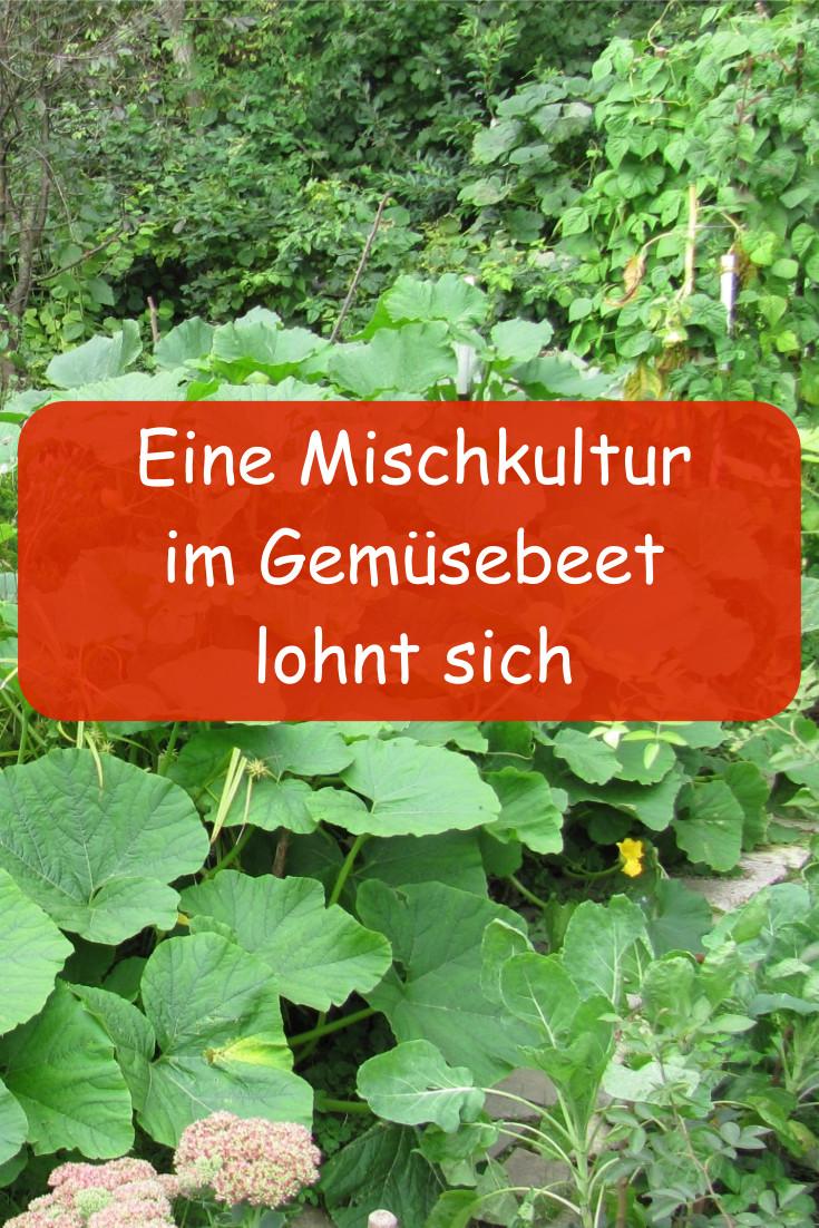 Gemüsebeet Mischkultur