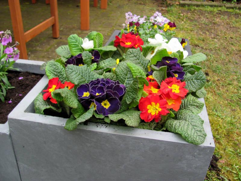 ab wann kann man balkonblumen pflanzen der garten ratgeber