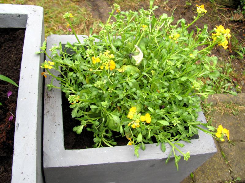 Gelbe Blumen Balkon