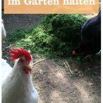 Hühner halten Garten
