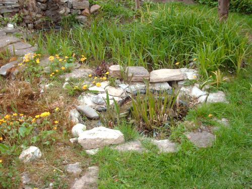 Wie groß sollte ein Gartenteich sein