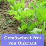 Gemüsebeet frei von Unkraut