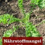 Nährstoffmangel Pflanzen