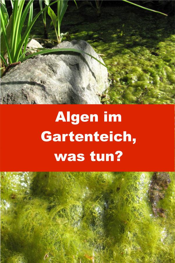 Algen im Gartenteich