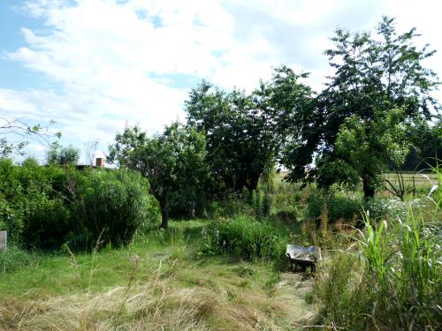 Einen verwilderten Garten wieder urbar machen
