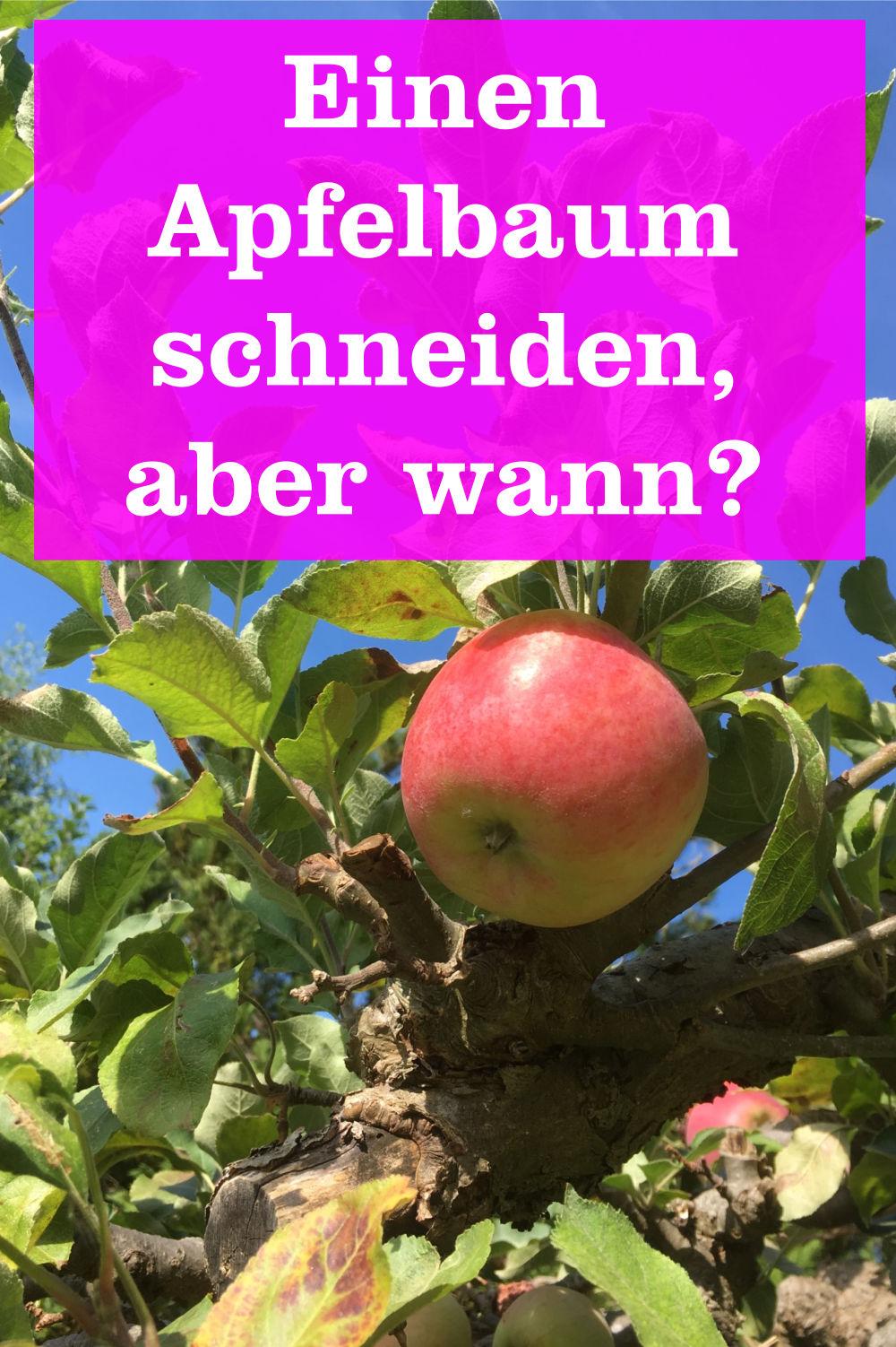 Apfelbaum wann schneiden
