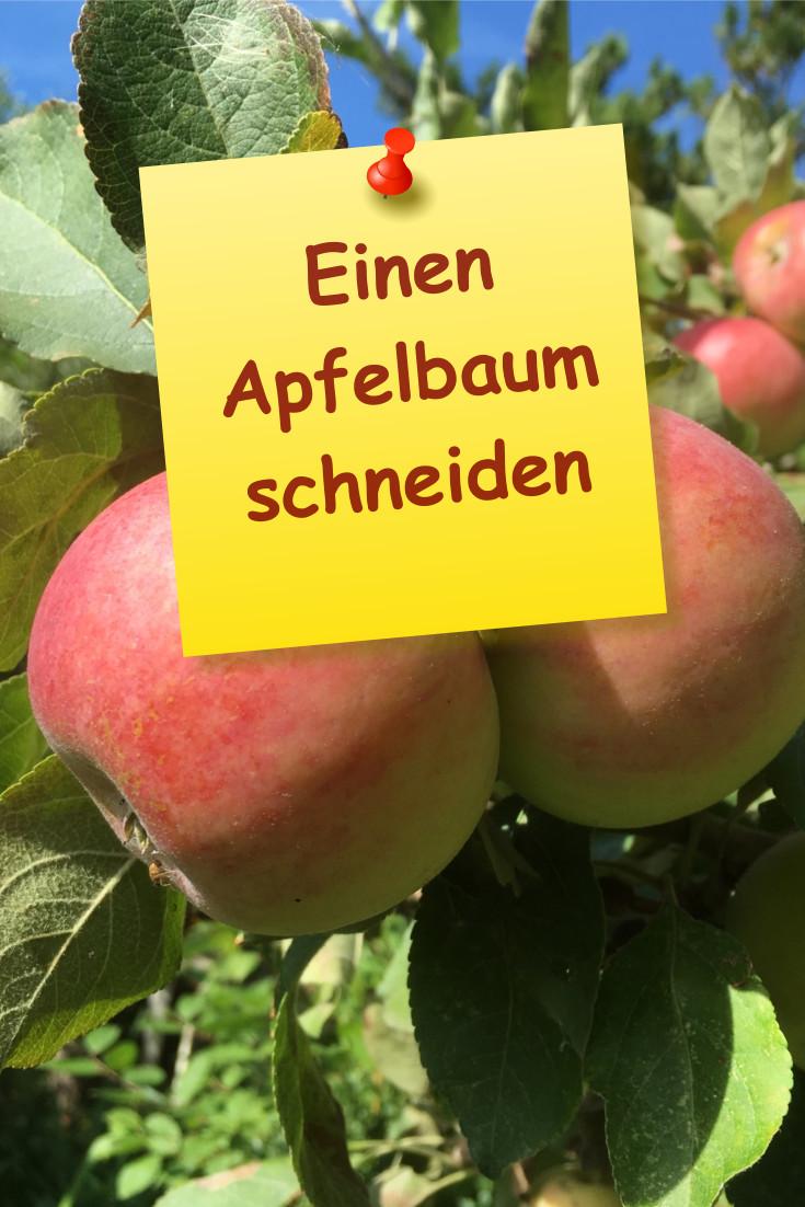 Einen Apfelbaum schneiden