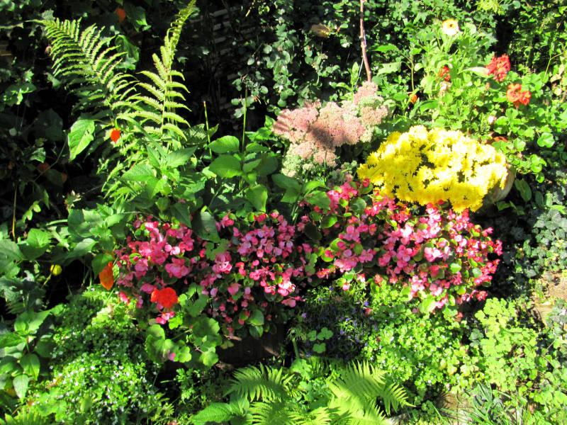 Blumen für Blumenkasten