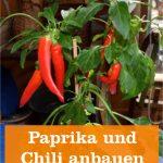 Paprika und Chili anbauen