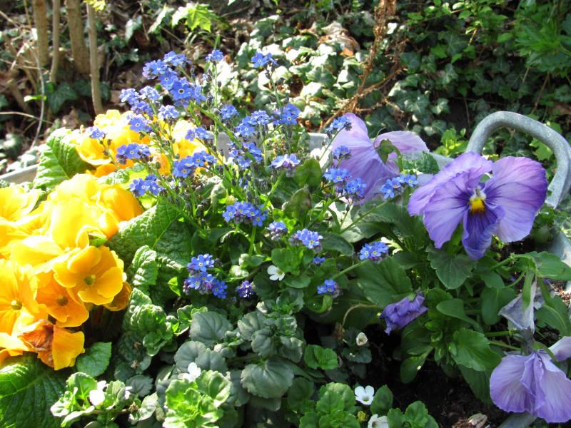 Pflanzen für Blumenkästen