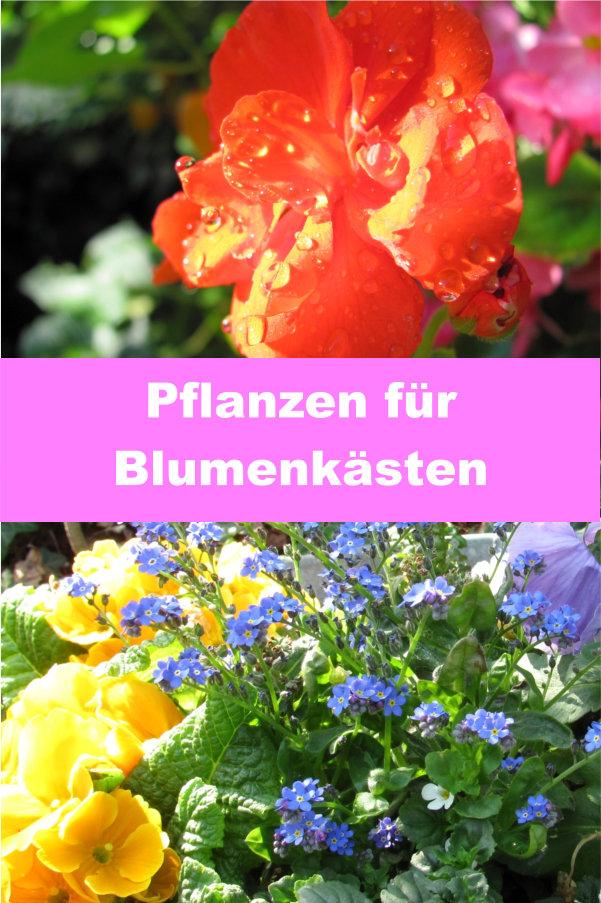 Pflanzen für Blumenkasten