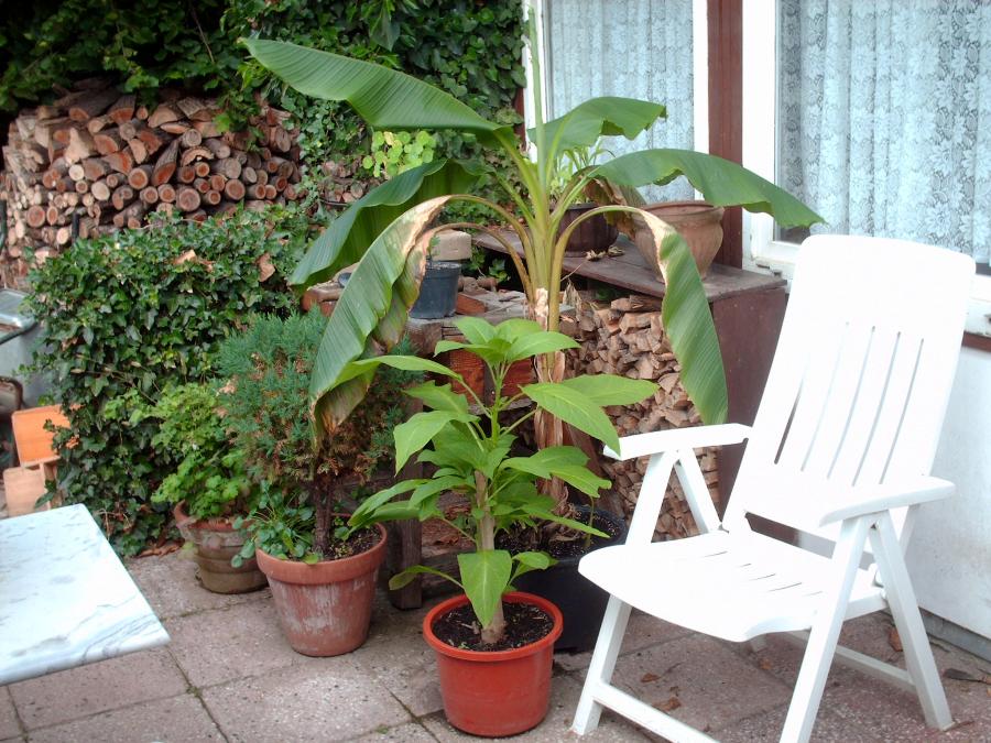 Pflanzen für  Balkon