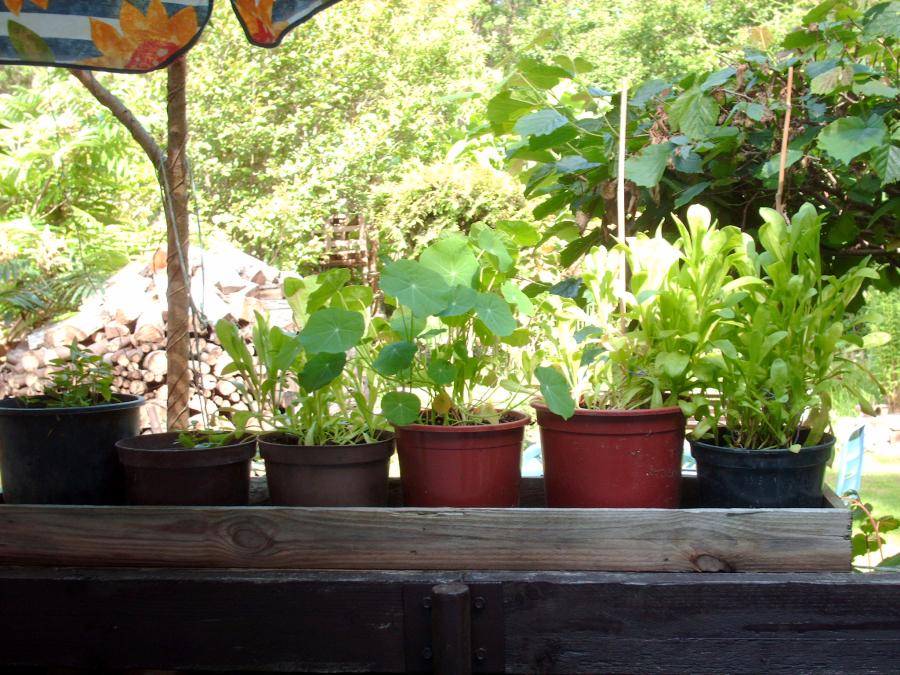 Pflanzen für den Balkon
