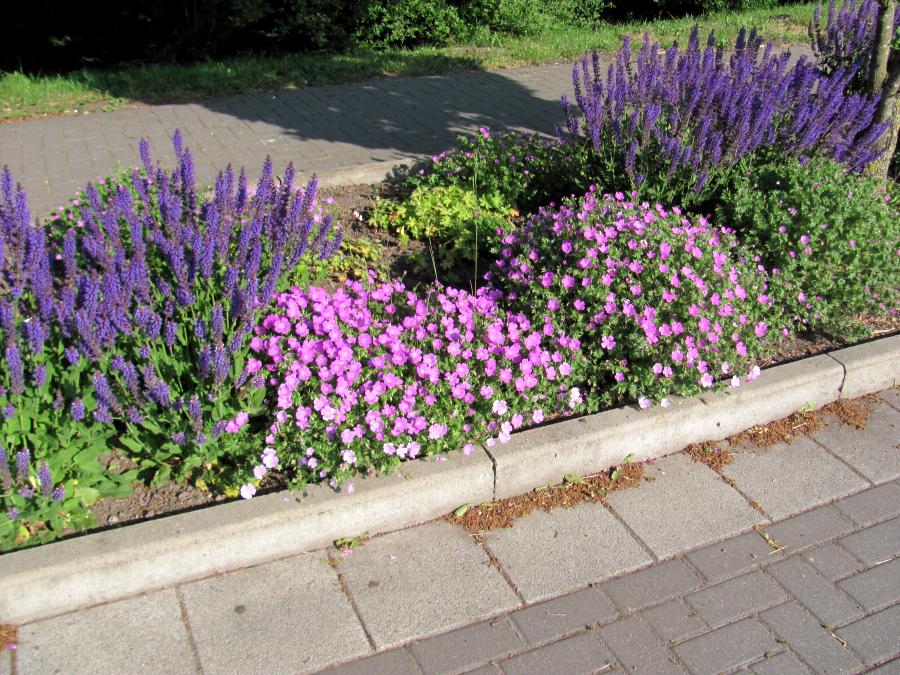 pflegeleichte gartenbepflanzung – godsriddle, Gartengerate ideen