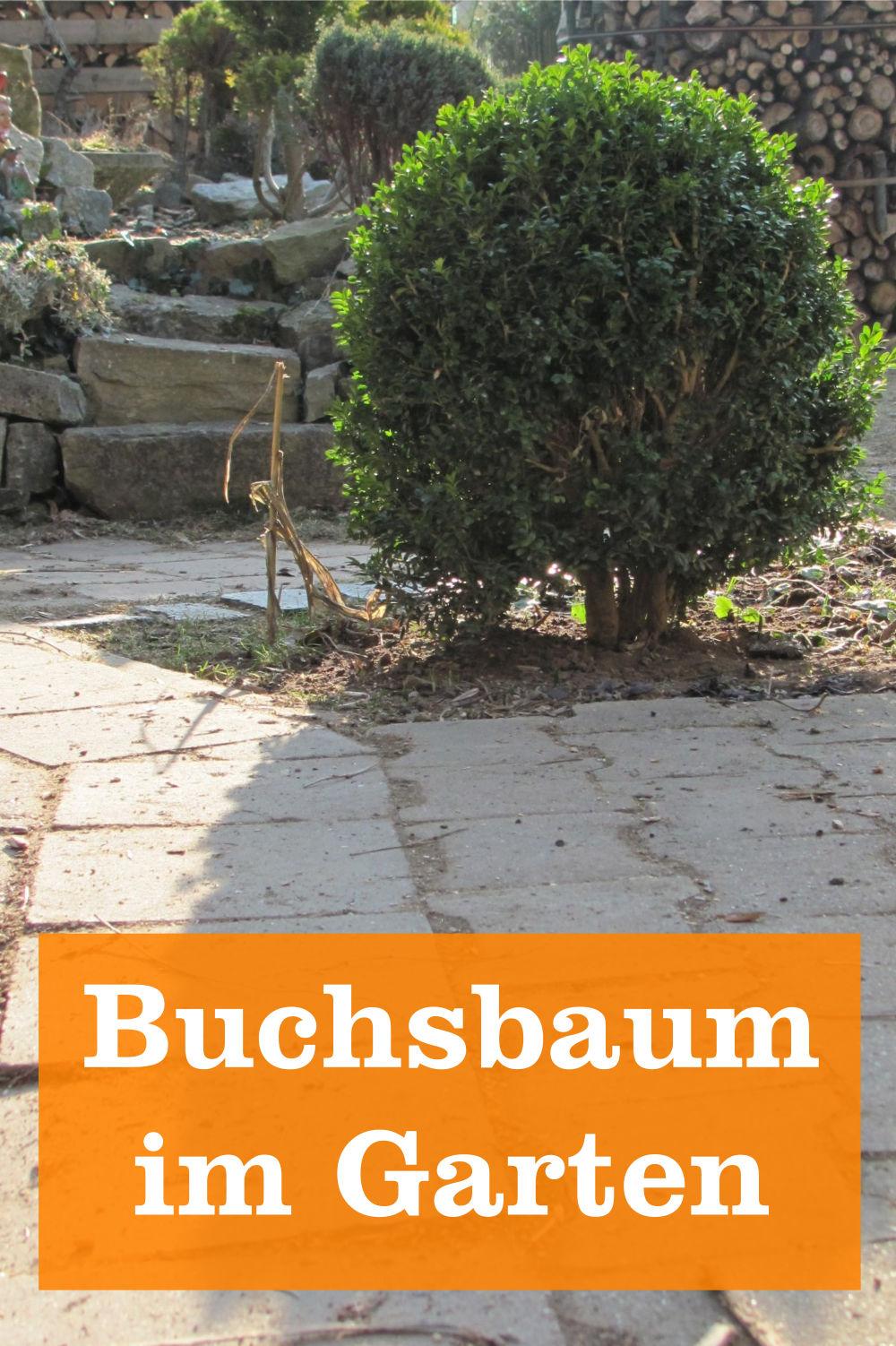 Buchsbaum im Garten