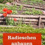 Radieschen anbauen
