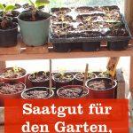 Saatgut für Garten