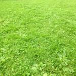Auf dem Rasen liegen