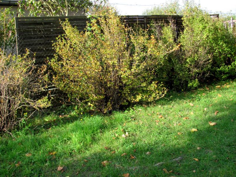 Sichtschutzzaun Holz Angebot ~ Sichtschutzzaun Garten Pictures to pin on Pinterest