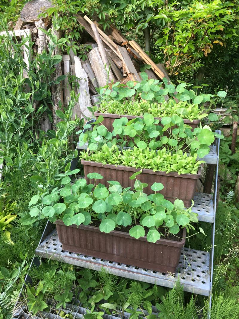 Treppe mit Pflanzen