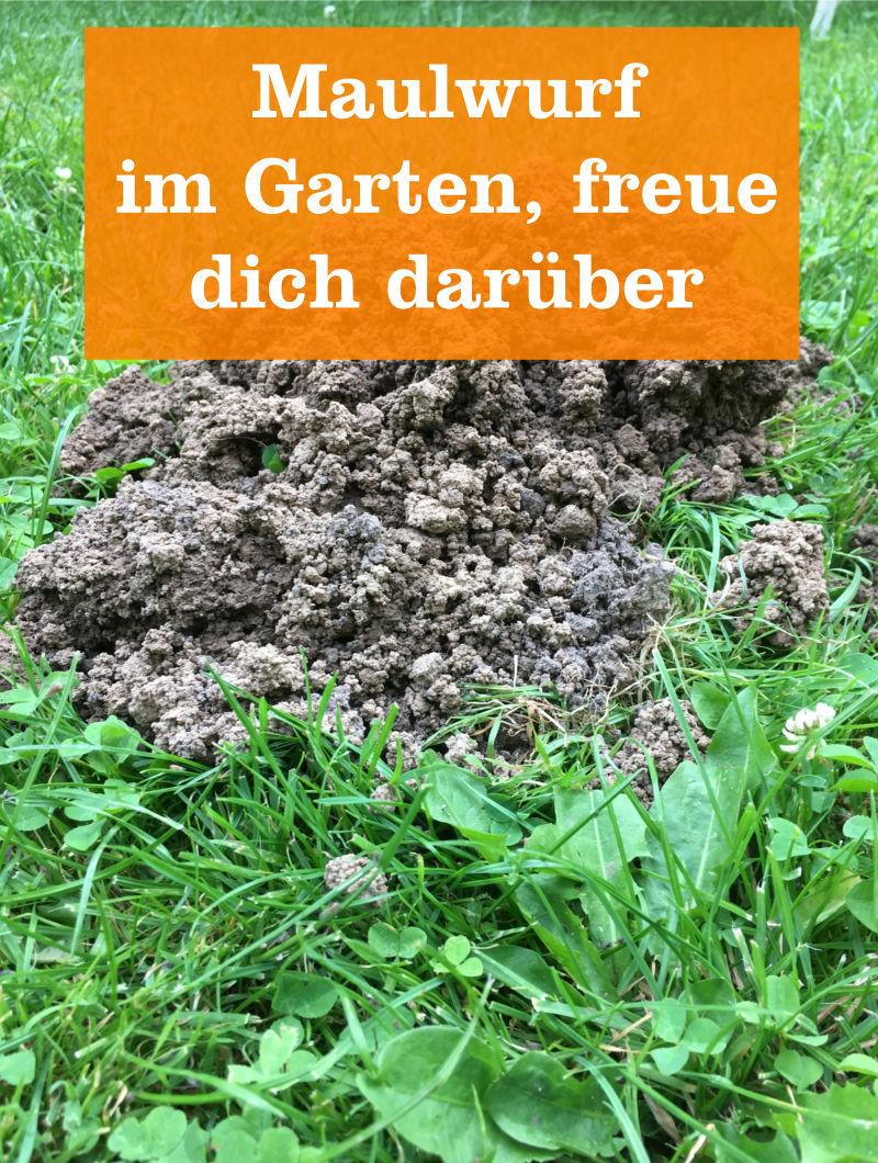 Der Maulwurf Im Garten Gartenbobde Der Garten Ratgeber
