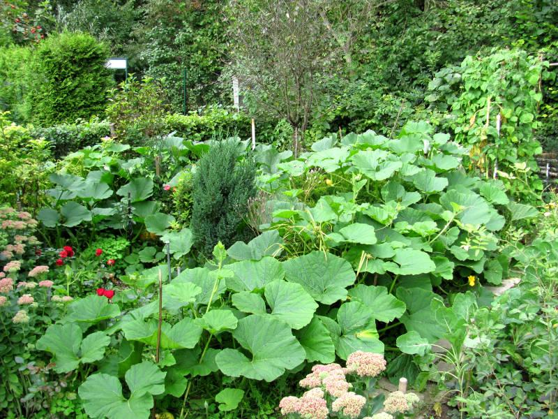 Gemüsegarten mit Kürbis