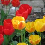 Gutschein Garten