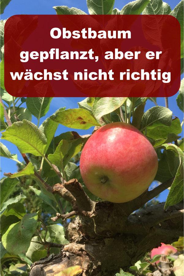 Obstbaum gepflanzt wächst nicht