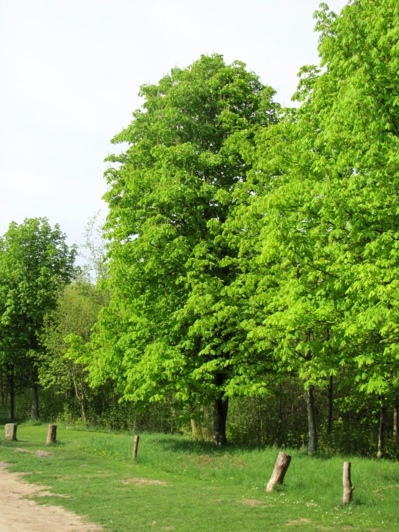Grüne Garten