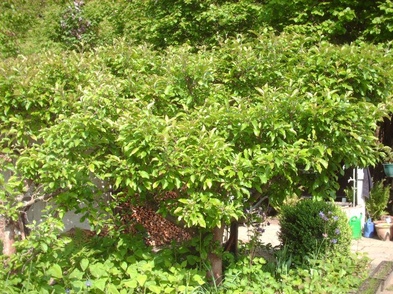 Obstbäume Garten