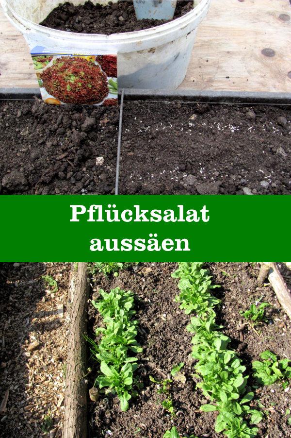 Pflücksalat anbauen