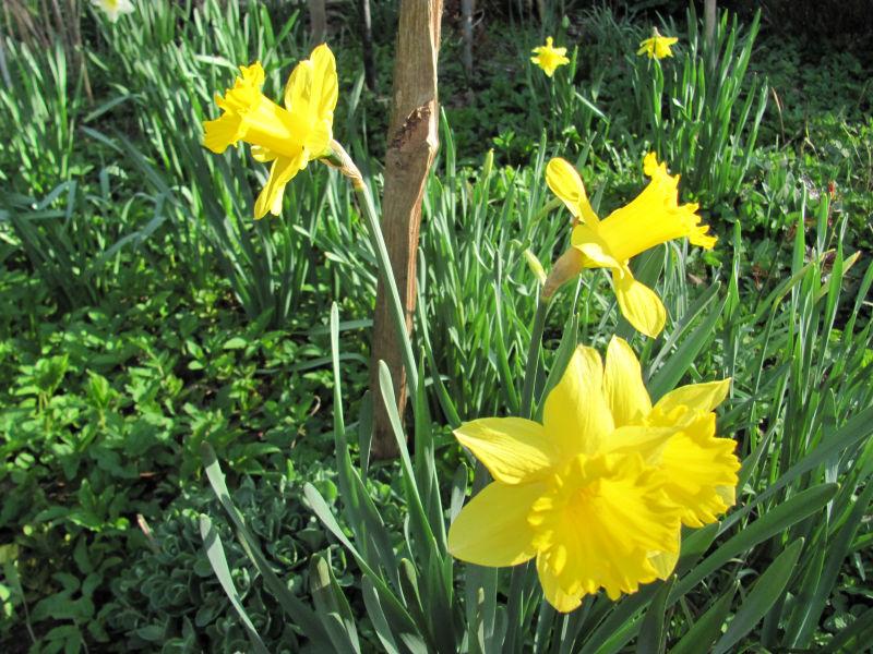 Verblühte Frühjahrsblüher 2