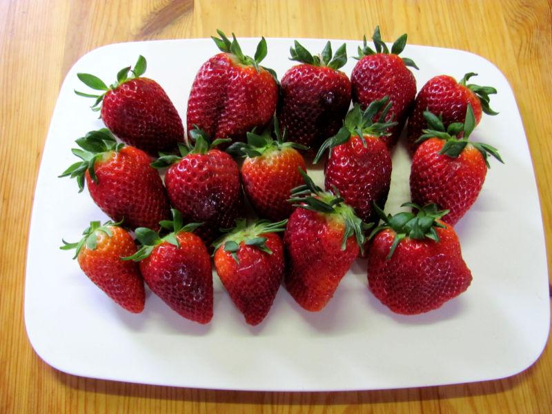 Erdbeeren Krankheiten