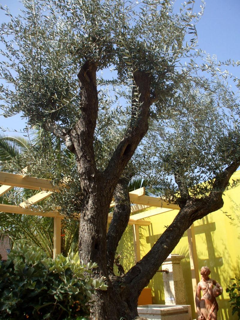 Mediterrane Terrasse Garten